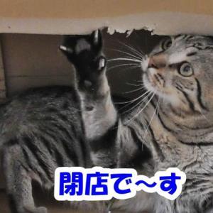 猫のお店 本日は閉店なり