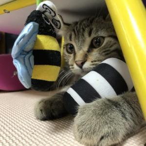 猫が紐を食べるなんてびっくり!誤飲させてしまって反省してます。
