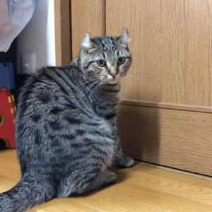 引き戸を見れば開けたくなる かしこい猫