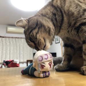 猫vs宇髄天元
