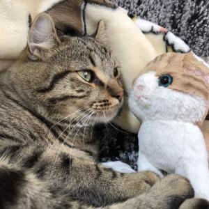 新しいお友達と猫