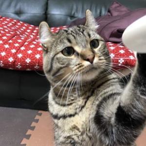 スプーンをおもちゃにする猫