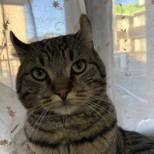 毛づくろいでくさっ!自分のニオイで不機嫌になった猫