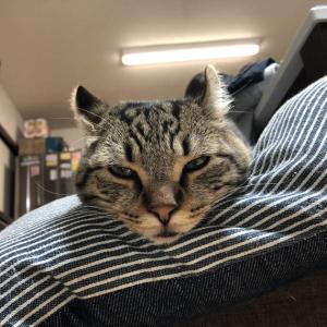 朝起こしにきてからの猫の様子