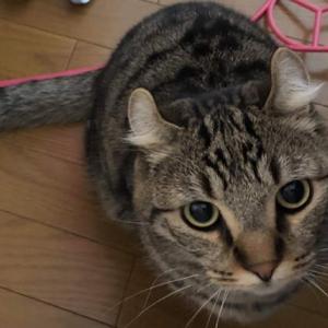 昨夜の地震から様子がおかしい猫