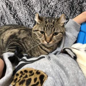お姉ちゃんを敷布団代わりにする猫