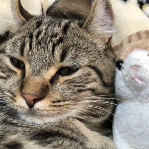 猫はかわいいだけじゃない、飼うと大変なことになる。
