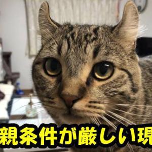 保護猫の里親募集条件が厳しくて、里親になれない!