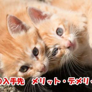 【ねこの入手先】猫は買う・もらう・拾う方法のメリットとデメリットについて