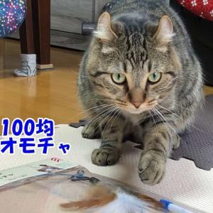 100均ダイソー 猫用おもちゃはコスパ重視するならコレがいい!