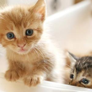 里親募集サイトから猫同士の相性を重視して子猫探し