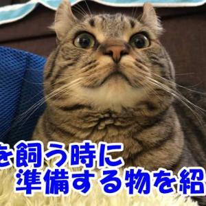 猫を飼うために必要なグッズって何? 準備する物
