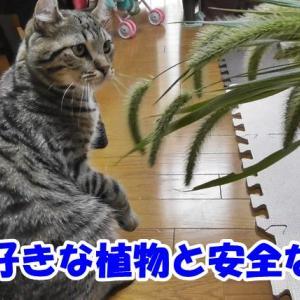 まさか笹好きな猫がいるなんて!猫が好んで食べる植物って何? 部屋に置いても安全な植物を紹介