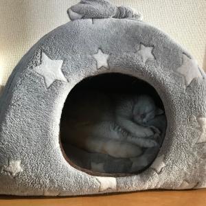 何故かまた真冬のドームベッドを使い出した!