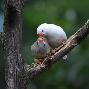 どんなペットが長生き?【鳥類編】インコや文鳥をはじめ様々な鳥たちの寿命や大きさをチェック!