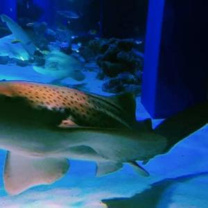 【2020年7月版】水族館に関する最新ニュース!