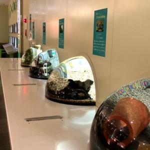【最新】姫路市立水族館は市民に大人気!姫路観光の際には是非訪れたい5つの理由!