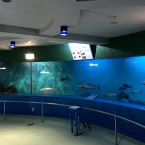 【日本最北】最果て稚内にあるとても不思議な「わっかりうむノシャップ寒流水族館」が面白すぎる!魅力をたっぷり紹介!