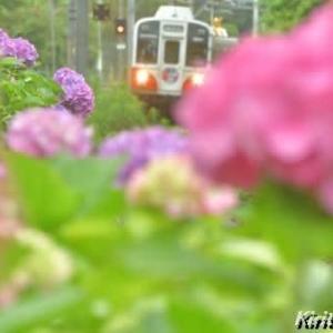 紫陽花と渥美線、其の四