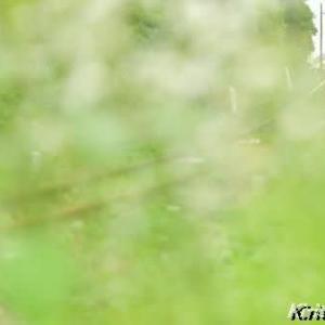 緑のベール