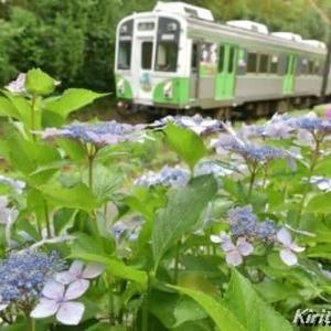 紫陽花と渥美線、其の二