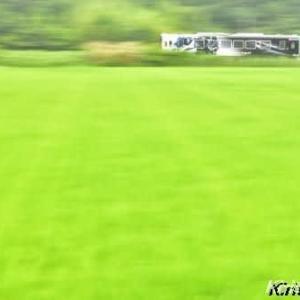 緑の田んぼとKATANA
