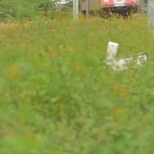 雑草に覆われた渥美線