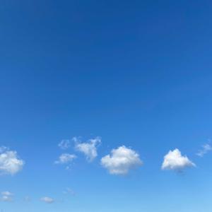 いい天気⁉︎どら焼きとルイボスティー