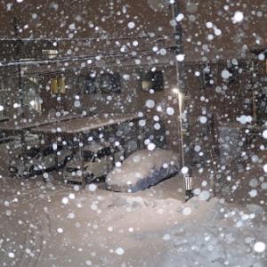 久しぶりの大雪じゃ!