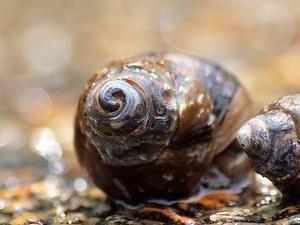 よく見る水の清掃屋の貝