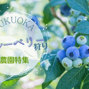 【夏が旬】福岡でブルーベリー狩りにおすすめの農園12選|最適な時期や1人あたりの料金も解説