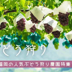 【2021年最新】福岡でぶどう狩りができる果樹園|田主丸やうきはが人気エリア!料金相場や時期も解説