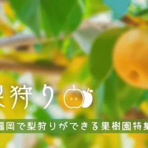 【2021年最新】福岡で梨狩りができる果樹園|うきは・朝倉がエリア!料金相場や時期も解説