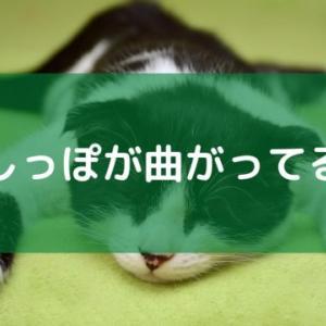 猫のかぎしっぽは幸運を呼ぶって本当?かぎしっぽになる理由は?