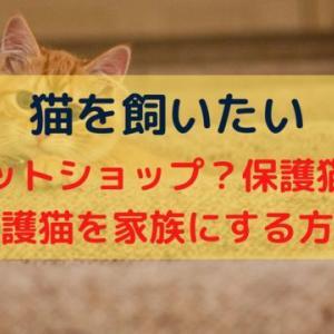 猫を飼うなら保護猫を家族にしてみませんか?