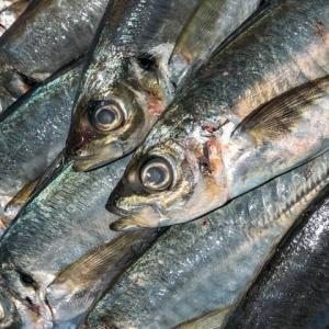 魚に罪はない🐟