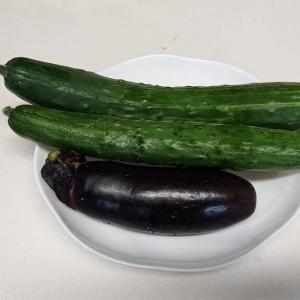 夏野菜の収穫(^^♪ 7月8日