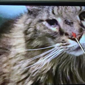 ★Vol.133  光の民が光明のネコの腫瘍を治した!