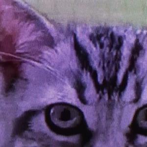 ★Vol.165 弘法大師様から授かった邪から守るネコ、「弥彦(ヤヒコ)」!