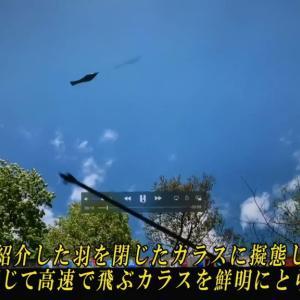 ☆羽を閉じたカラスに擬態したUFOが高速で飛ぶ。(Vol.83)