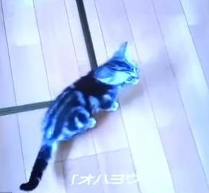 ☆お喋りするネコ「おはよう!」Talking cat!「Good morning」…(Vol.165)
