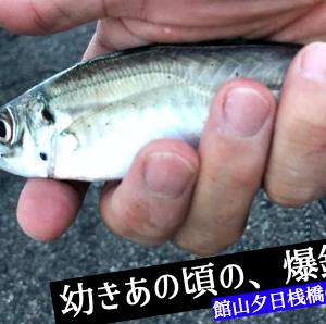 館山の人気スポット「夕日桟橋」。サビキ釣りでアジ爆釣!幼き頃を思い出す。