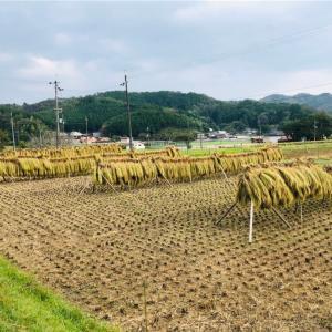 ココペリ稲刈り祭り!