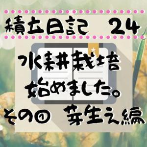 家庭菜園(水耕栽培)始めました。種まき~芽生え編/ 令和2年6月積立日記