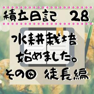 家庭菜園(水耕栽培) 徒長編/令和2年6月21日積立日記