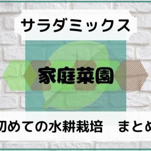 初めての水耕栽培(サラダミックス)まとめブログ/6月30日積立日記