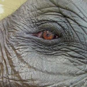 絶滅危惧種スマトラゾウとの出会い~インドネシア/タンガハン保護地区~