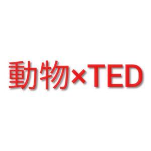 動物好き&英語勉強中の方へ~TEDのおすすめ動画3選~