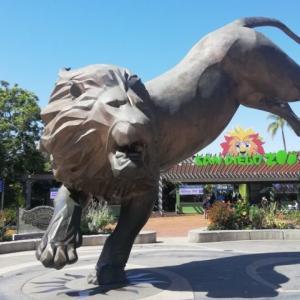 世界一大きい動物園の実態~アメリカ/サンディエゴ動物園~