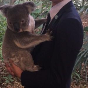 オーストラリア/ローンパイン・コアラ・サンクチュアリ~コアラを抱っこしよう!~